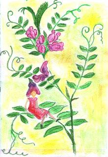 Molnár Anita rajza